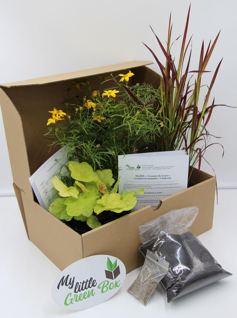 Plante A Planter En Septembre un amour de plantes vivaces , abonnement 6 mois